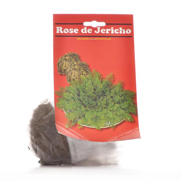 Rosa Jerico Pequena